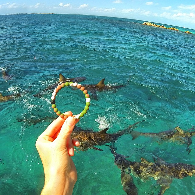 The gang's all here! Spend the day with the ones you love #livelokai Thanks @sharksneedlove