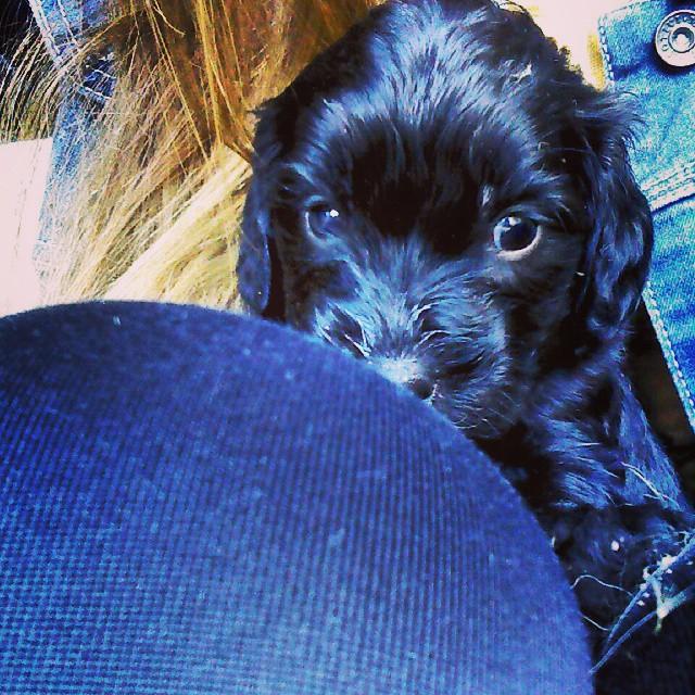 Bienvenido Barto! #puppy #cute #loving #family #newmember #dog #baby