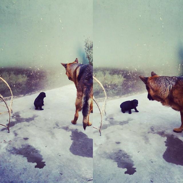 Conociéndose #bebus #dogs #bebes #amores #lindos