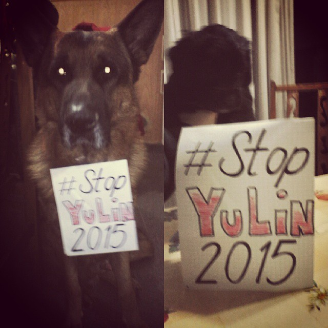 #stopyulin2015 #stopyulin #love #for #dogs #animals #friends