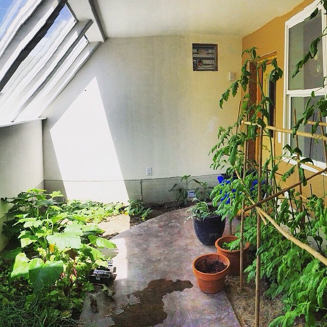 Some of our reject bamboo has found its new home in this beautiful greenhouse, built by TanSnowMan's step father Mark... #TribeUP greenhouses!  Photo: @mophofomo  #PandaPoles #Repurposed
