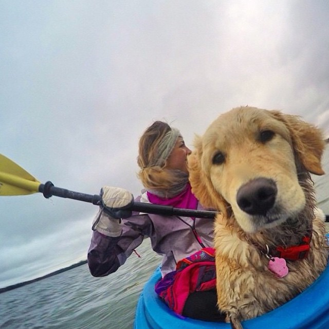 Who's your favorite #adventurebuddy? Great shot @chanielnelson! • Shouting out to @lisaguadzuka, @jennifer_violet, @solomoncohen, and @meepbop for your kickstarter support! • #sisterhoodofshred #dogfriend #kayaking #outdoorwomen #dogsofinstagran