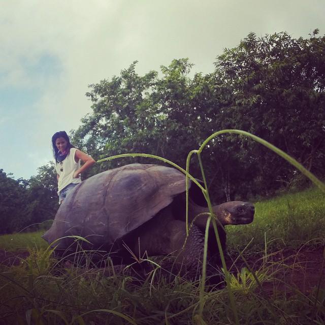 Tortugas que sobrepasan nuestra cintura en Santa Cruz, Galápagos. @lolicevasco #tortugas #santacruz #islasgalapagos #Galapagos #maetuanis #convivirconlonatural