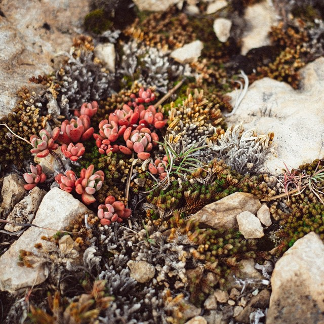 "In the #desolationwilderness, the little things are as mind-blowing to stare at as the big things. Then again, a wise man once said ""from little things, big things grow. #paulkelly #california #backcountry"