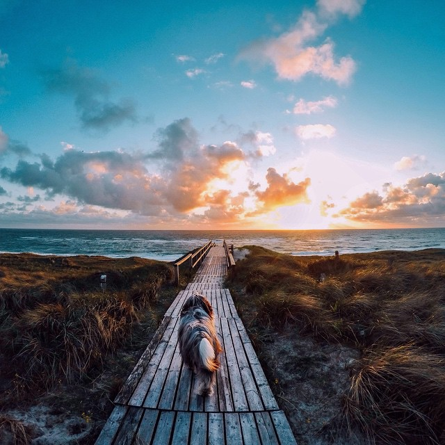 Photo of the Day! What do you sea?  @marlersinger and her dog enjoy a beautiful sunset at the beach. Submit your best photos by clicking the link in our profile. #GoPro #Pets #Beach #PhotooftheDay