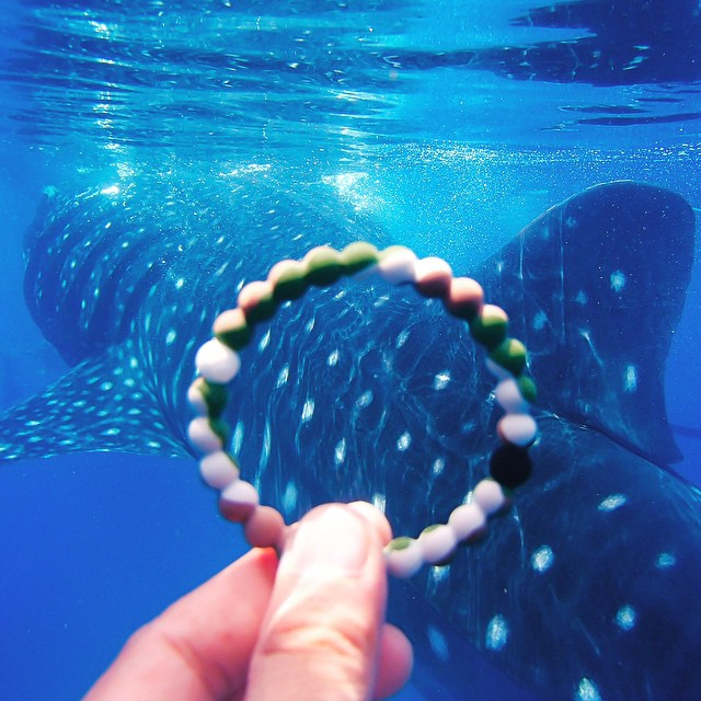 Did you know that every whale shark has a unique pattern of spots and stripes on their skin? @world_wildlife uses them to identify individual sharks, and ensure that they stay safe. Lets help these gentle giants out! #livelokai  Thanks @ninjarod