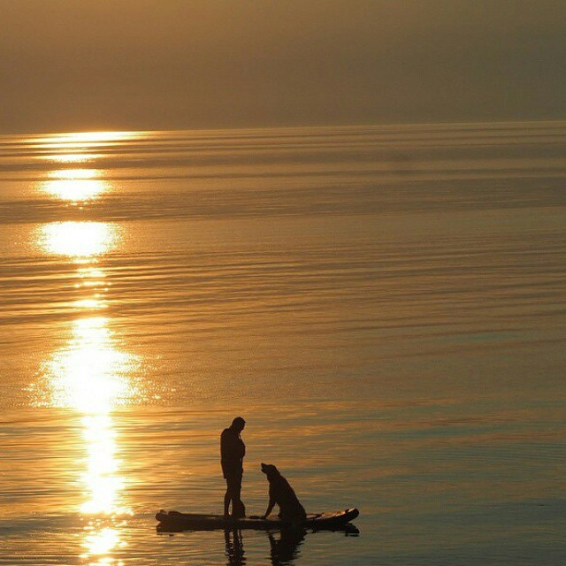 #Repost from @suponthefly ・・・ Pure Michigan with a girl and her dog #theweeklyinsta #standuppaddle #HalaGear