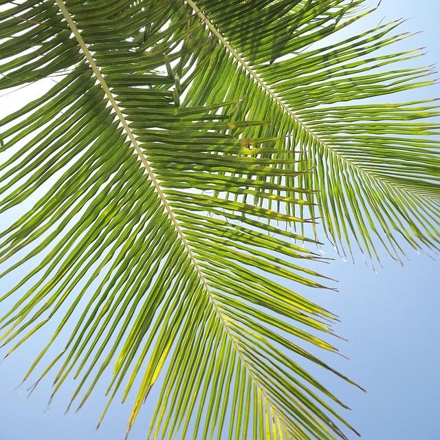 #AkelaSurf  Office  for today  #tropial #paradise