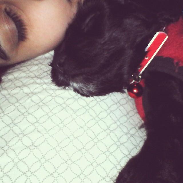 Buenas noches! #goodnight #puppydog #little #dog #cutie #loveyou #puppylove #beautiful