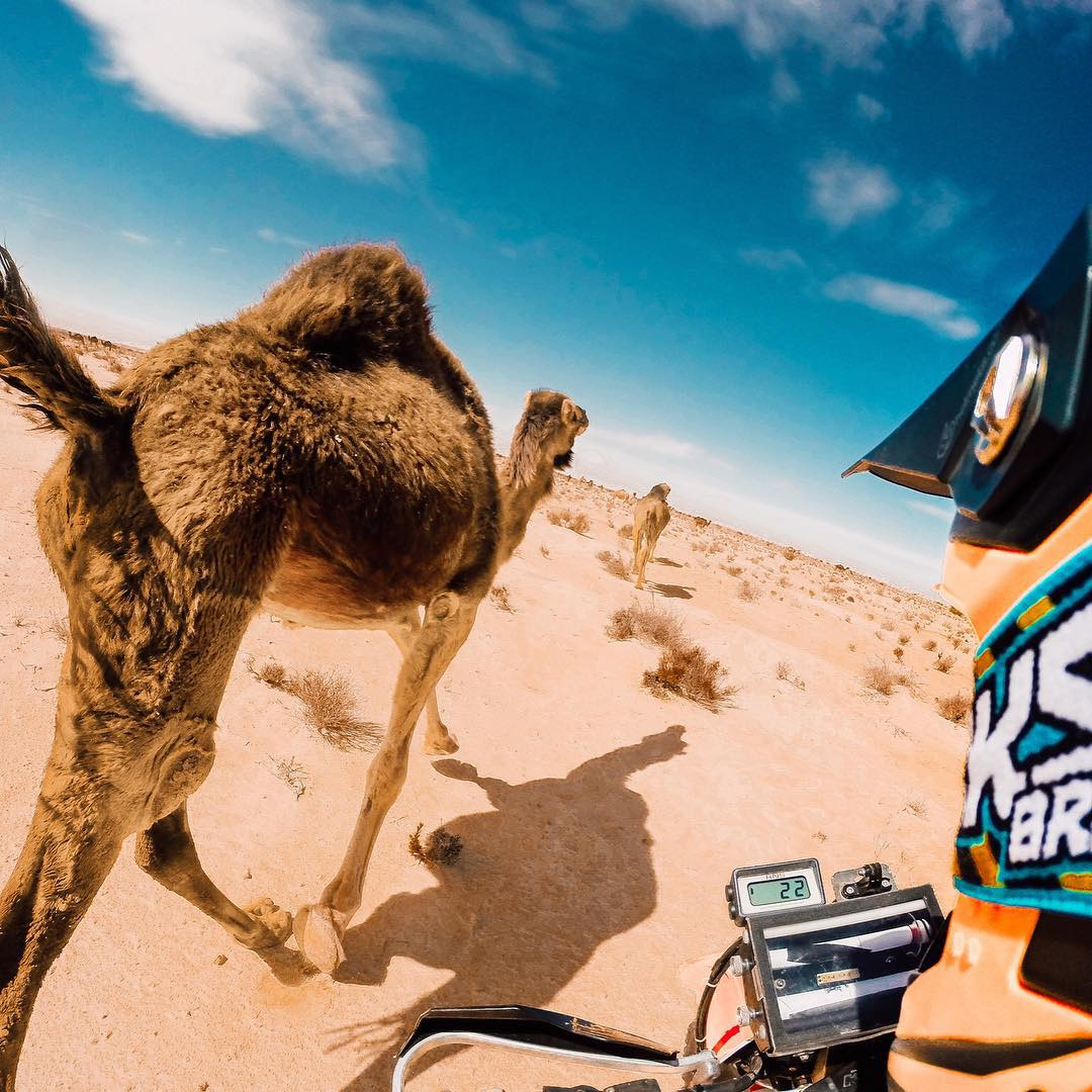 Happy Hump Day!@chansgodfrey and his father ride with some camels in Tunisia! #GoPro #Camels #Africa #HumpDay