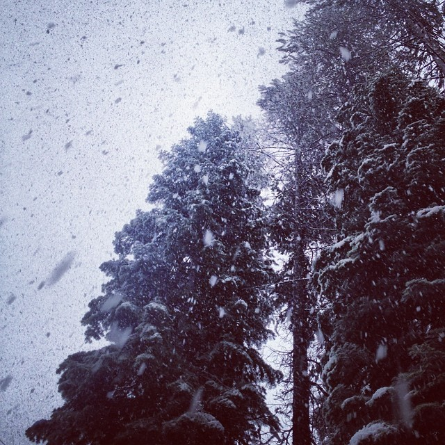 Haven't seen this stuff in a LONG time! How did you celebrate the #snow today? #dontstop #neversummer #winter #tahoe