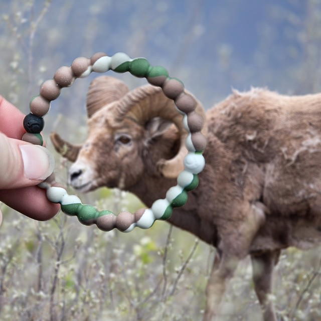 Grab life by the horns #livelokai Thanks @marynthenorth