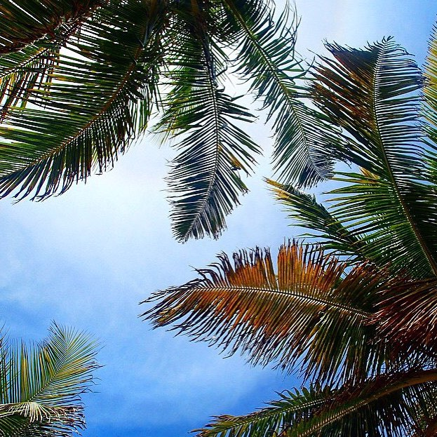 Summer is... palm trees