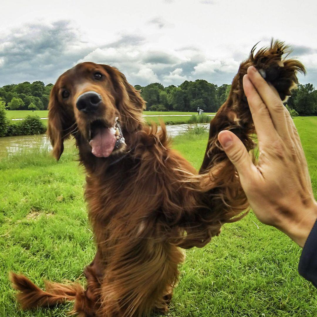Photo of the Day! Nothing beats a high-five from man's best friend. Photo by Phillipp Godon.  #GoPro #Pets
