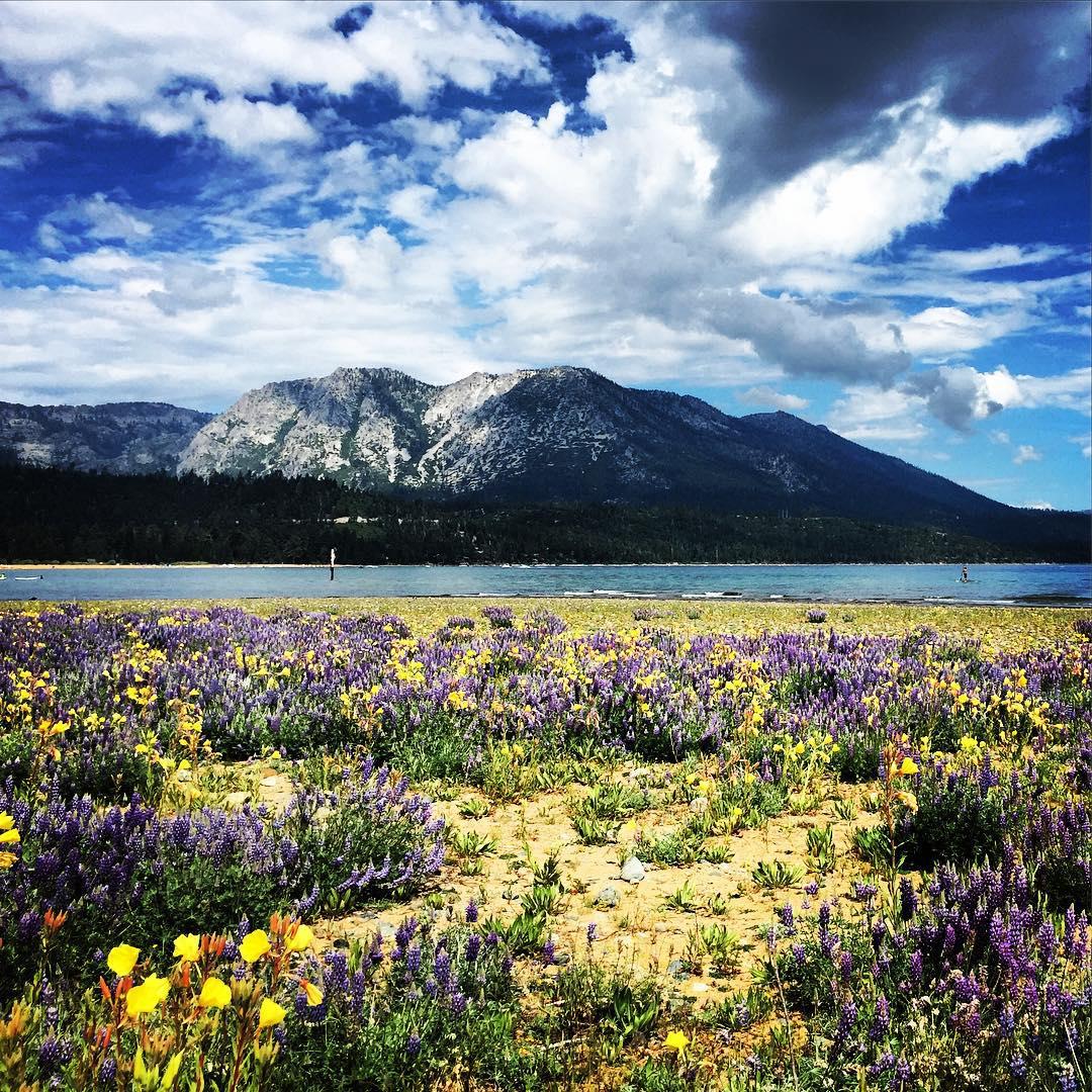 Wildflowers going wild #laketahoe #4thofjuly #tahoe