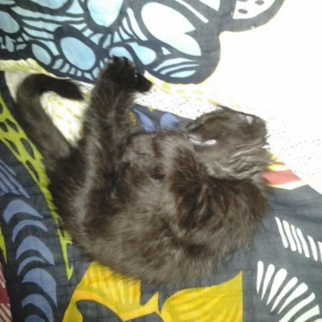#sleepy #latoya