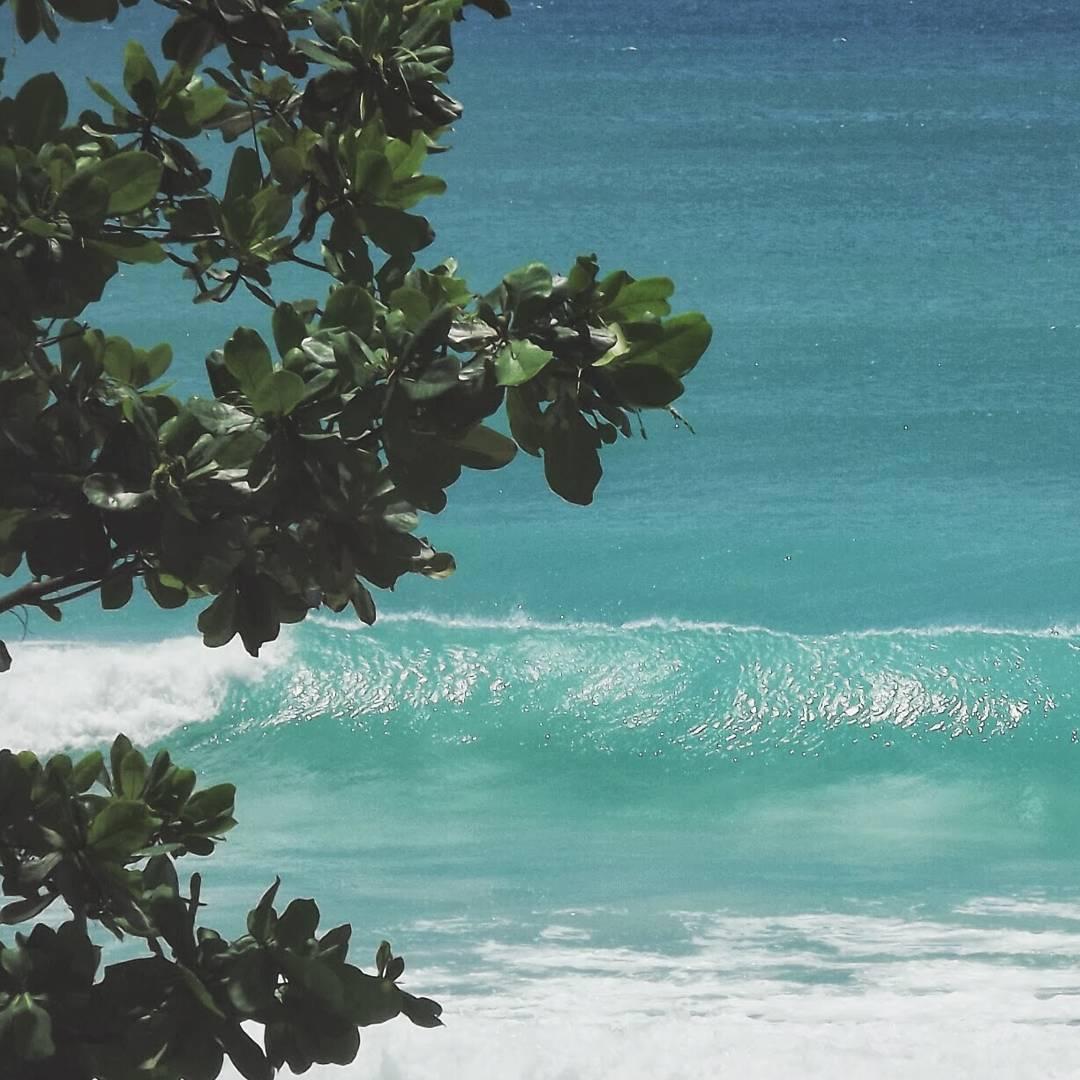 #AkelaSurf  Office  Barbados  #paradise  #tropial