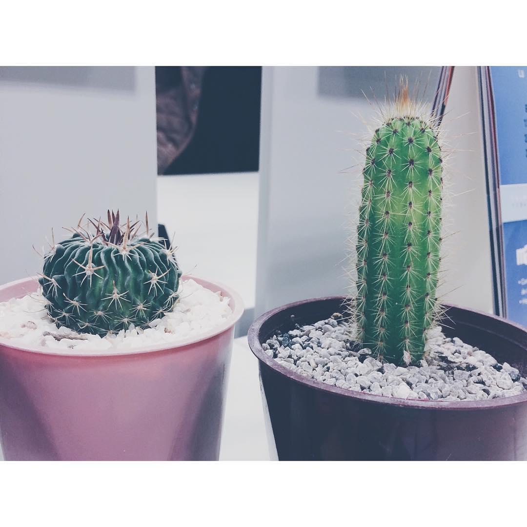 Say Hi a mis new babys