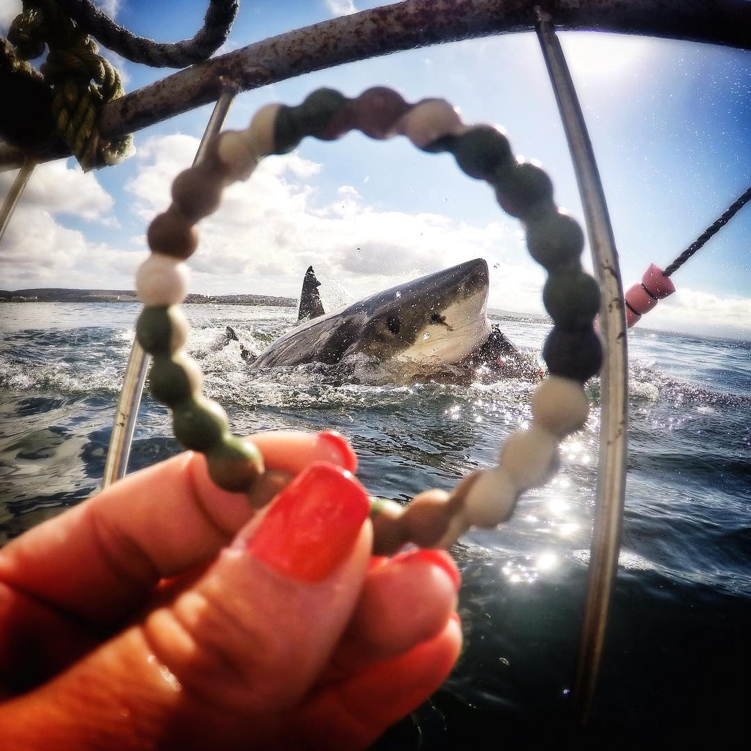 Take a bite out of #Sharkweek! Who's on board? #livelokai Thanks @sharkservation