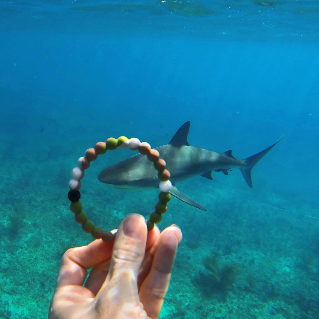 Fearless #livelokai #SharkWeek Thanks @sharksneedlove