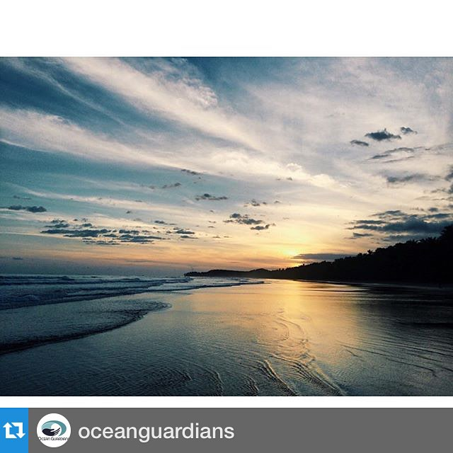 Follow @oceanguardians to continue receiving updates on our Ocean Guardian Journey: all things marine conservation and environmental stewardship including tips and ideas, as well as Bodhi Surf's Corporate Responsibility program!  #Repost...