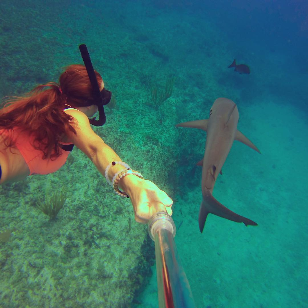 Follow the leader #livelokai  Thanks@sharksneedlove