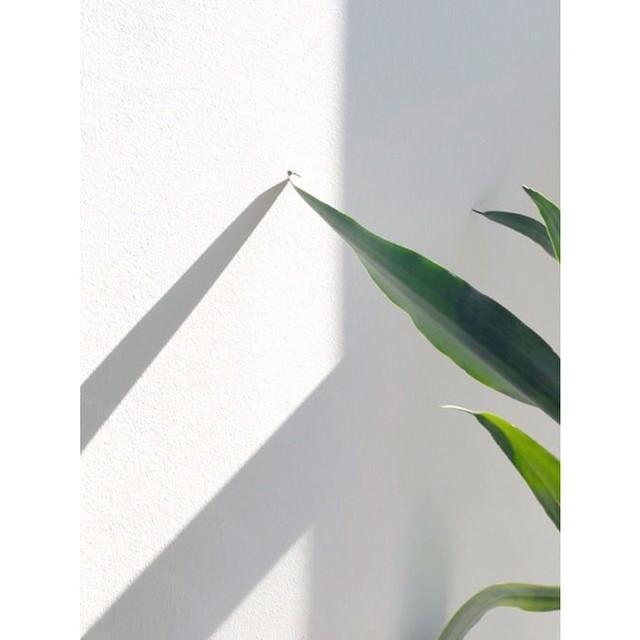 Nuestros diseños llevan nombres de plantas, flores o árboles