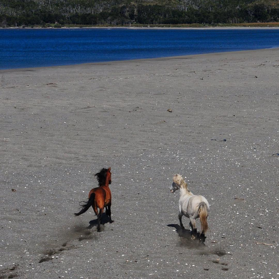 Libres y salvajes en Bahía Aguirre - Peninsula Mitre.