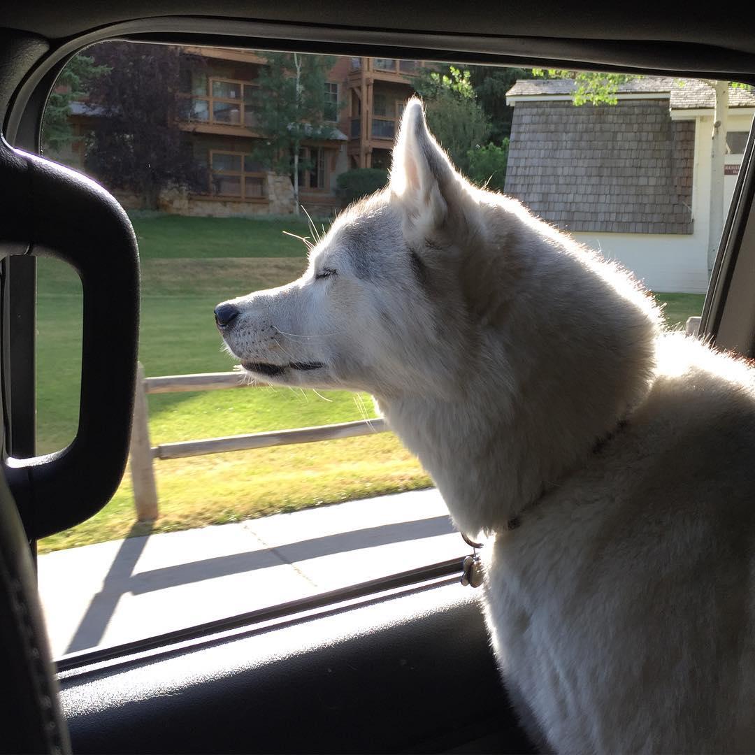 Bentley enjoying one of his favorite places. #happyplace #FordRaptor #BentleyChickenFingersBlock