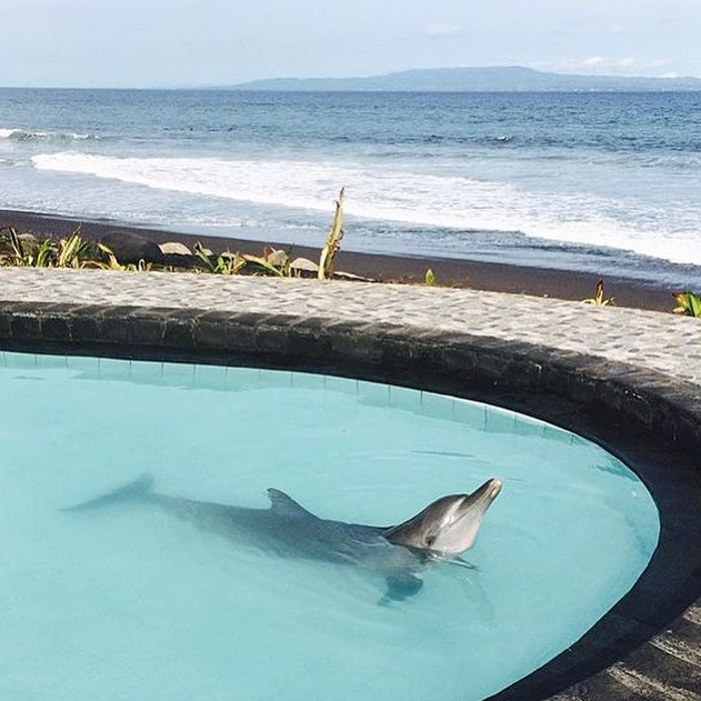 As surfers and ocean lovers, the site of this image is absolutely heartbreaking. The Wake Bali resort at Keramas beach is holding 4 dolphins captive within a tiny chlorinated pool just steps away from their natural habitat. Please follow the link in...