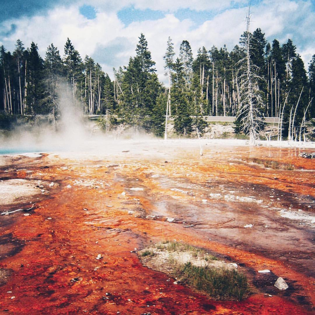 A rainbow of color in Yellowstone NP captured by @s_n_anderson #radparks #parksproject