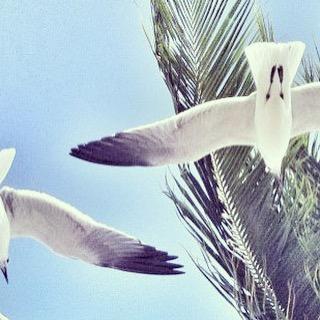 Freedom!  #Paez #PaezSummer #PaezStyle #PaezLife