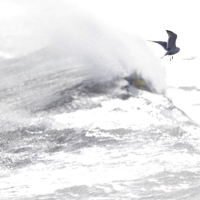 Thinking about dropping in... #birdsshredtoo #coldasf #coldwatersurf #winter #instagood #photooftheday #like #picoftheday #instadaily #ig #instasurf #webstagram #bestoftheday #love #follow #igdaily #newengland #eastcoastsurf #eastcoast #surf #surfing...