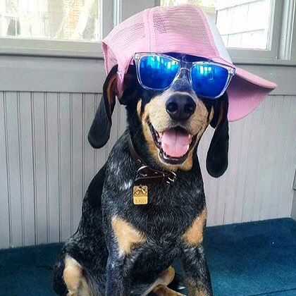 The most stylin' pup!