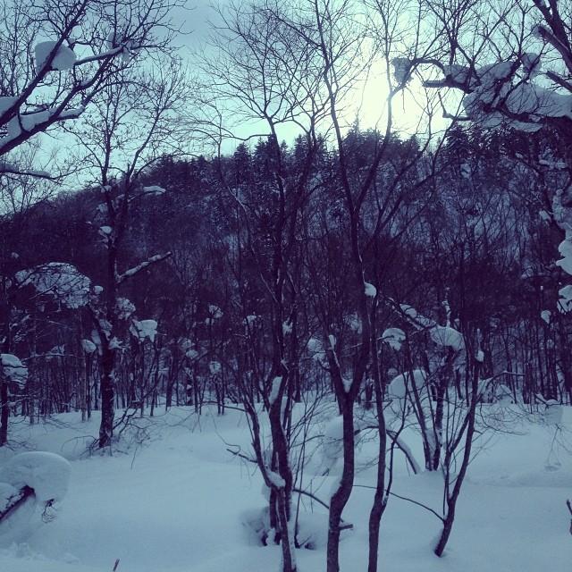 See you next winter #niseko #hanafun #hokkaido #japan #snowboard #dontpanicitsorganik #organik