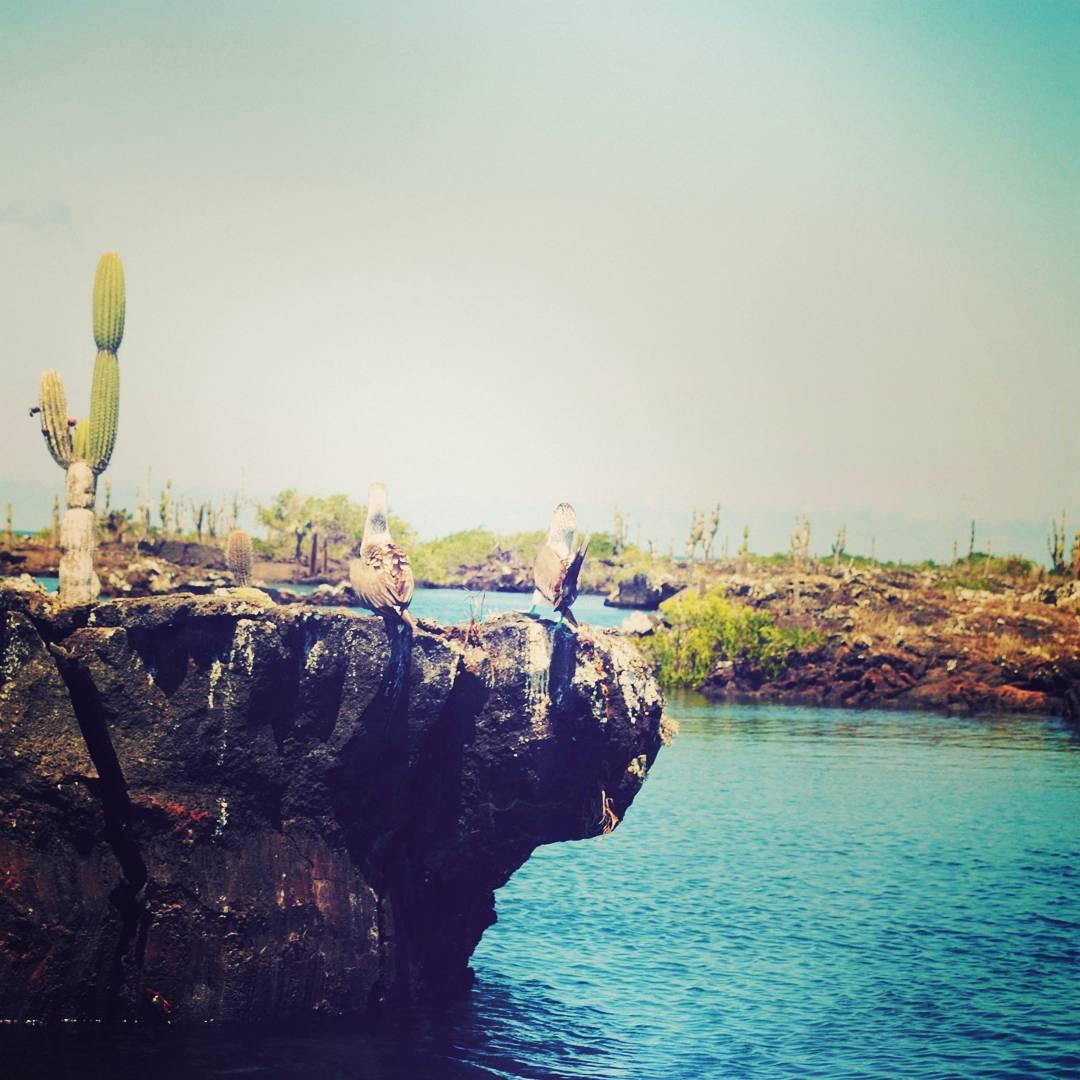 Los Túneles. Paraíso Natural compuesto a partir del paso de la lava de volcanes de las islas durante miles de años. #convivirconlonatural #maetuanis #lostuneles #islasgalapagos #isla #isabella