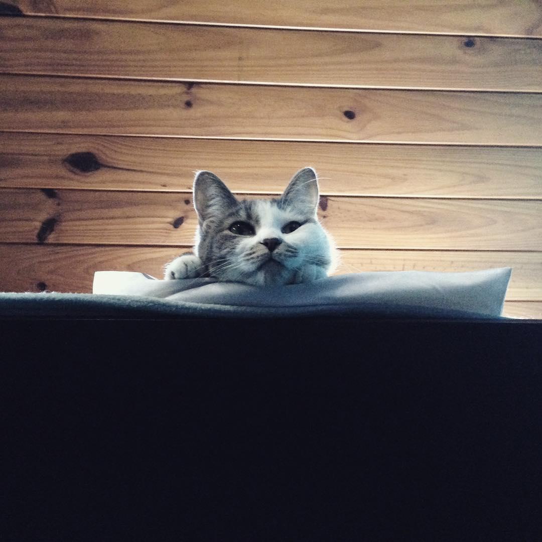 Buen dia Soda ⭐️ #amorgatuno @tintoysoda #gata #cat #kitten