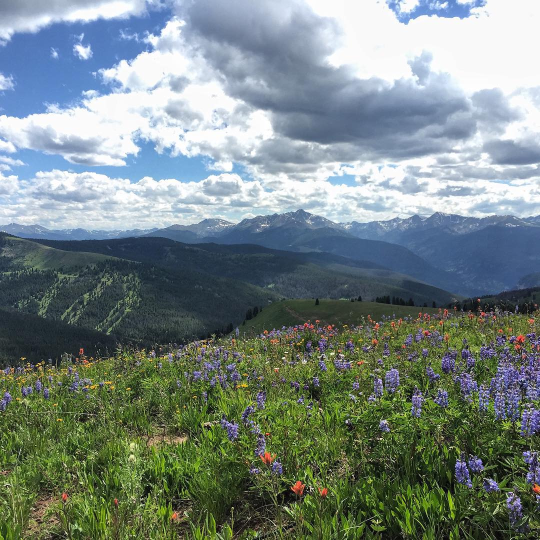 A beautiful day for some hiking @vailmtn All of the wildflowers are in bloom setting up a great shot with Mt Holy Cross and Blue Sky Basin in the background! #coloradopics #hiking