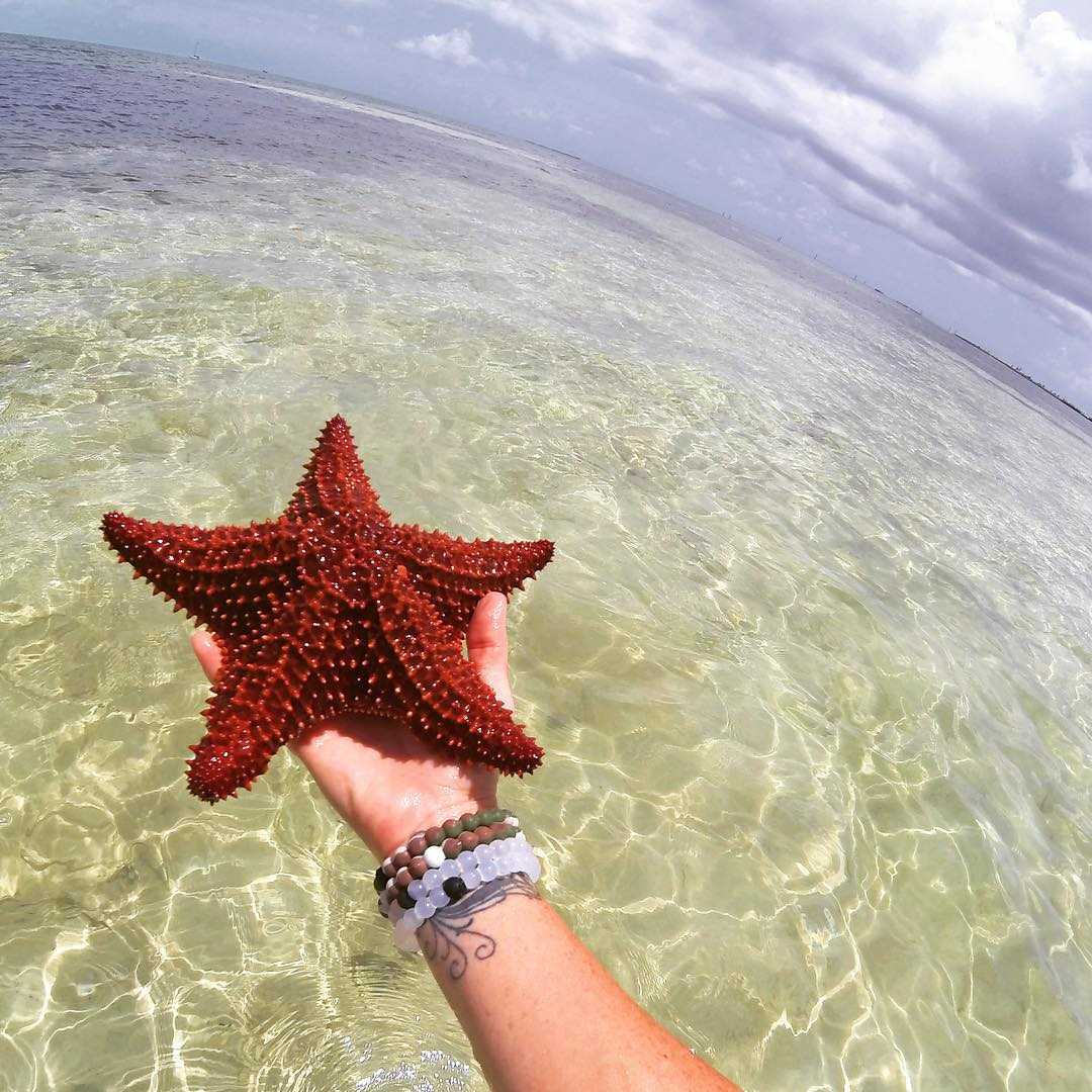 Caught a falling star #livelokai Thanks @Sharksneedlove
