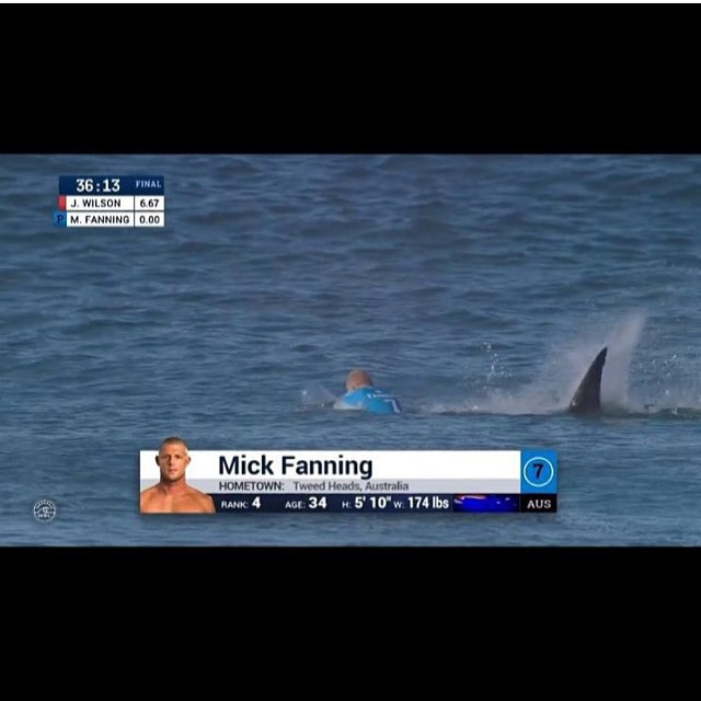 They say that every time a person paddles out they have to conquer three of man's greatest fears. This is one of them. Hats off to three time World Champ, Mick Fanning for fighting off this white shark in his final against Julian Wilson at JBay in...