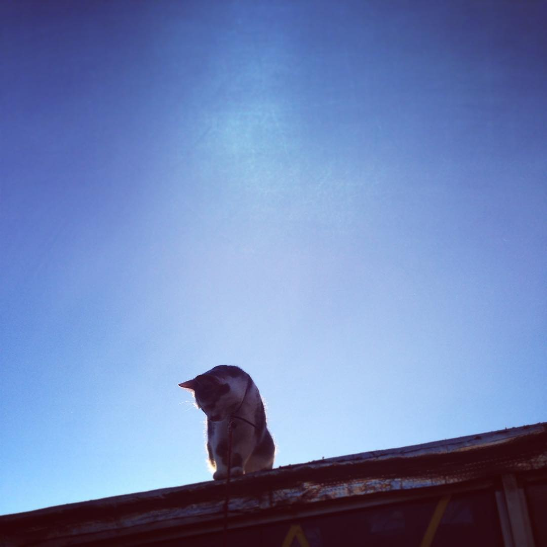 Soda ⭐️ #cat #atardecer #gato #amorgatuno