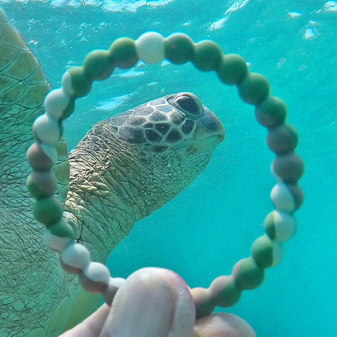 Shellfie! #livelokai  Thanks @rodruales