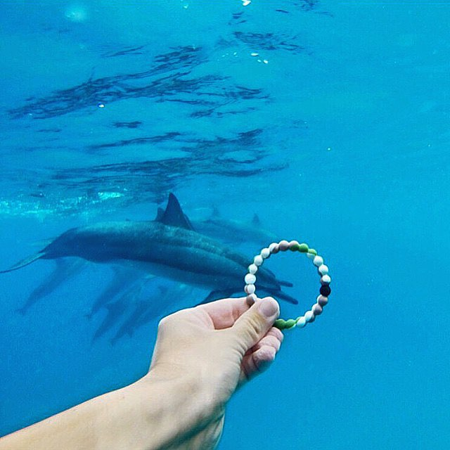 Hurry up, 7 days left to purchase your wild lokai! Follow the link in our bio to get yours  #livelokai  Thanks @paige_bartos_
