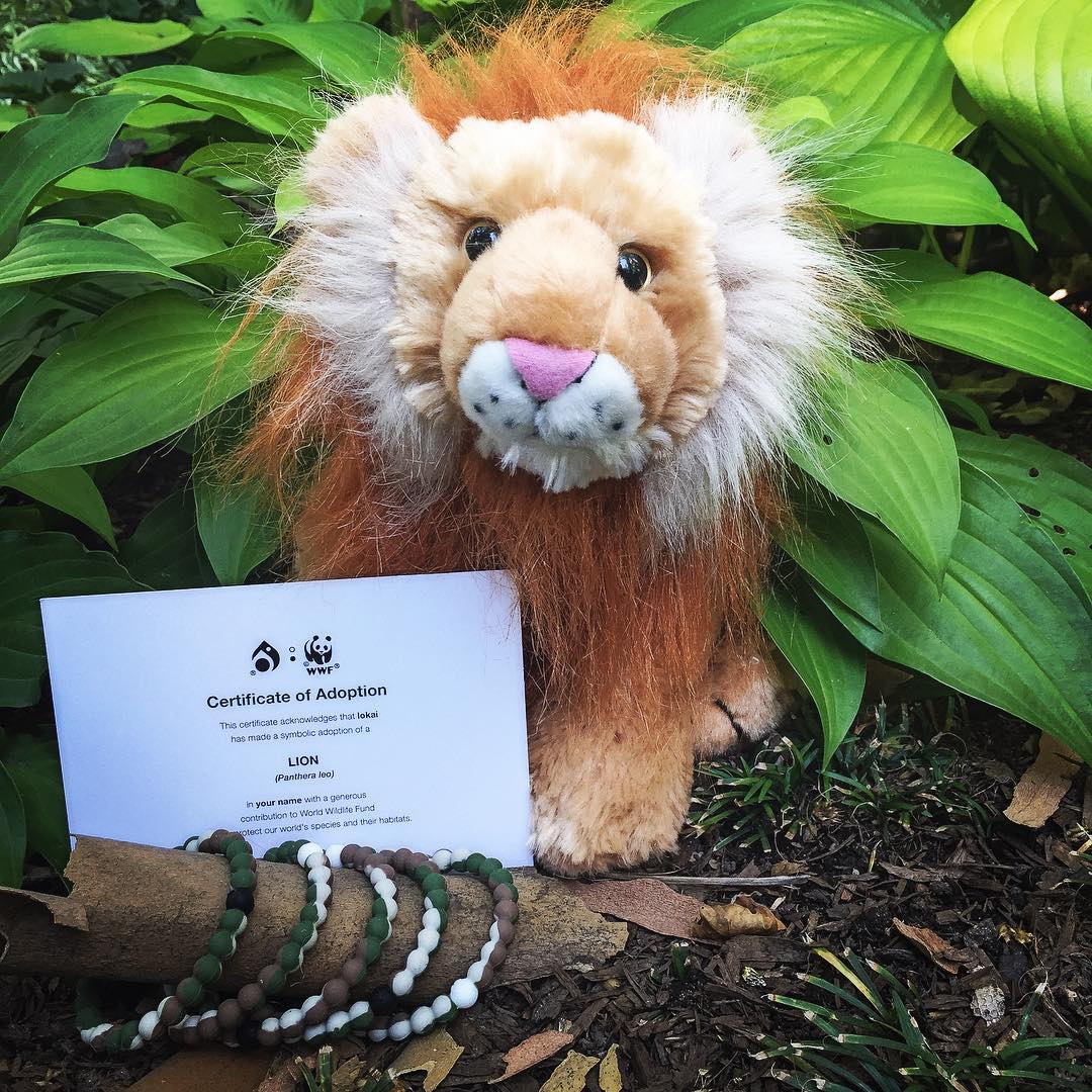 Ever thought of adopting a lion? Today may be your chance!  For all wild lokai orders placed today on mylokai.com, lokai will pick ten lucky winners to receive a symbolic adoption of a Lion.  Each winner will get a certificate of adoption, and this...