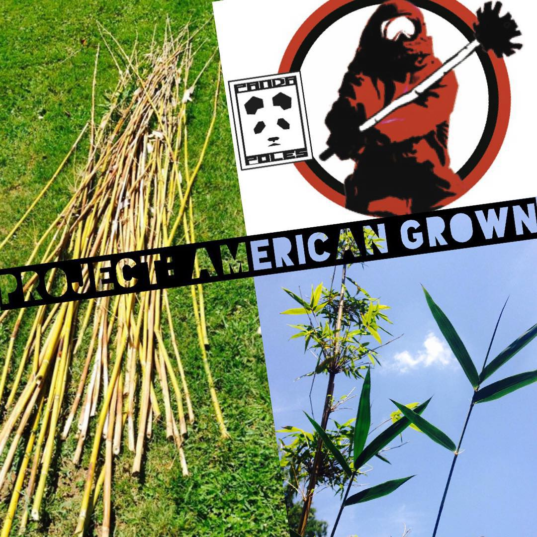 Project: American Grown | Update No. 4 | 'Our' bamboo which was planted in Georgia less than a year ago by Panda bamboo steward Josh Eisenberg has been showing amazing results! Recently, Josh pruned out the dead wood from the frost to give new shoots...