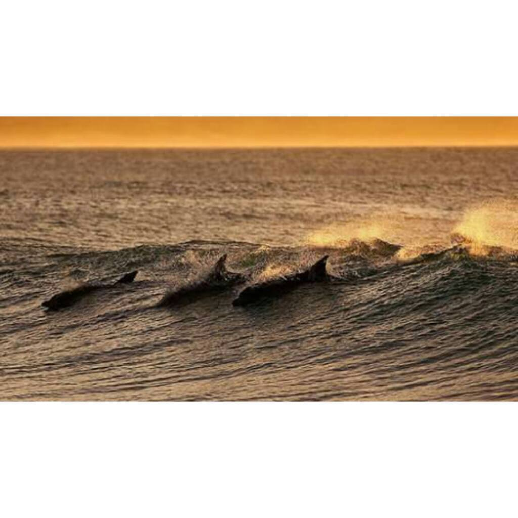 Compartiendo las olas en J-Bay, Sudáfrica