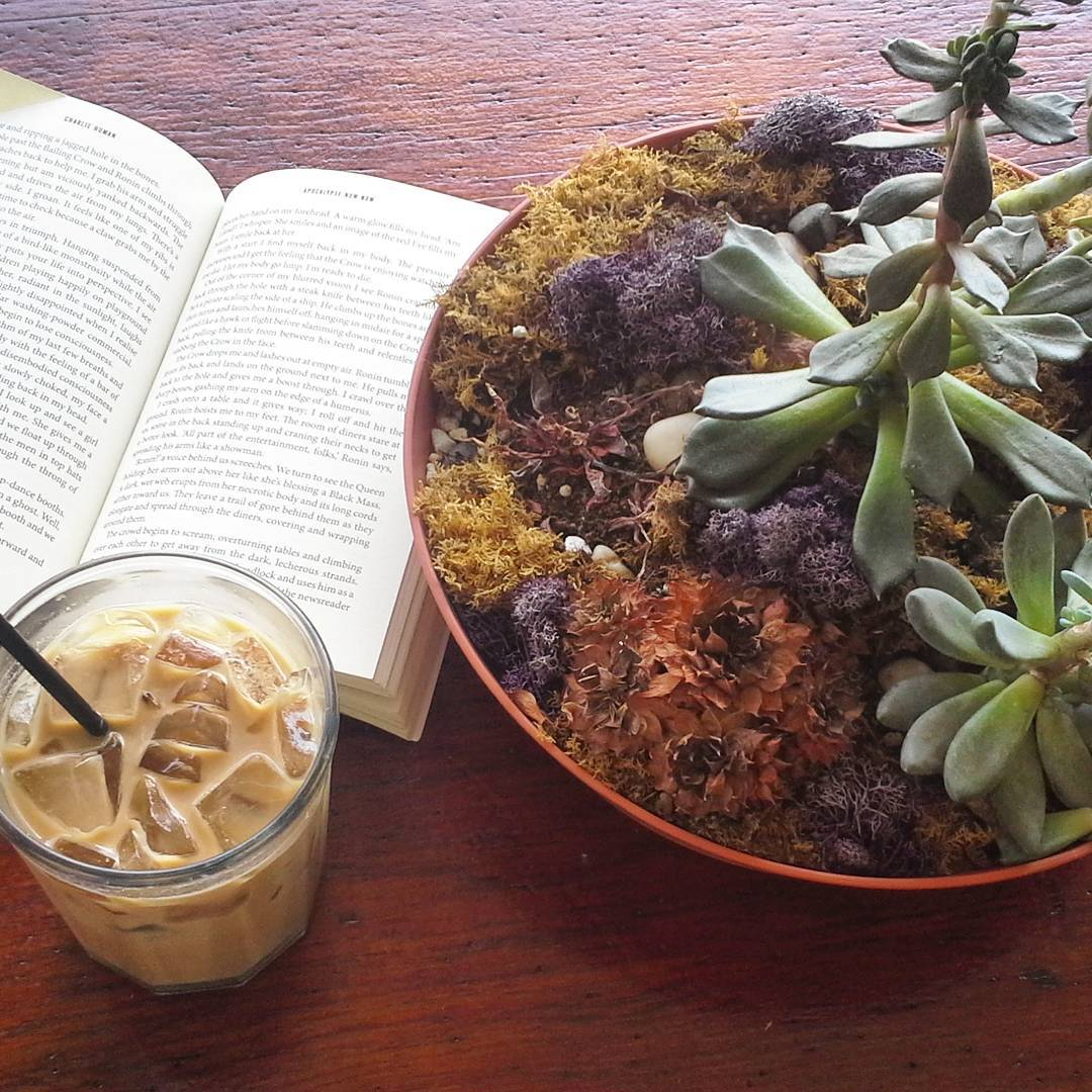 Iced coffee and the written word in the company of succulents. Post surf || happy space. Where do you #findyourself ? #luvsurf #lifeisgood #coffee #readabook #learnsomethin #play