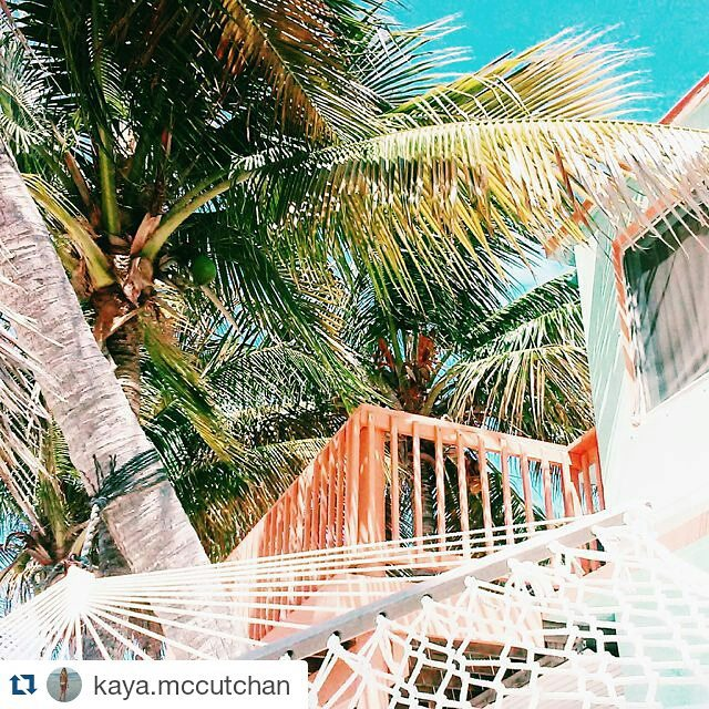 Where we'd rather be... #Repost from #LUVRep @kaya.mccutchan #luvsurf #hammocks #naptime #afternoon #perfect #palmtree #paradise ・・・