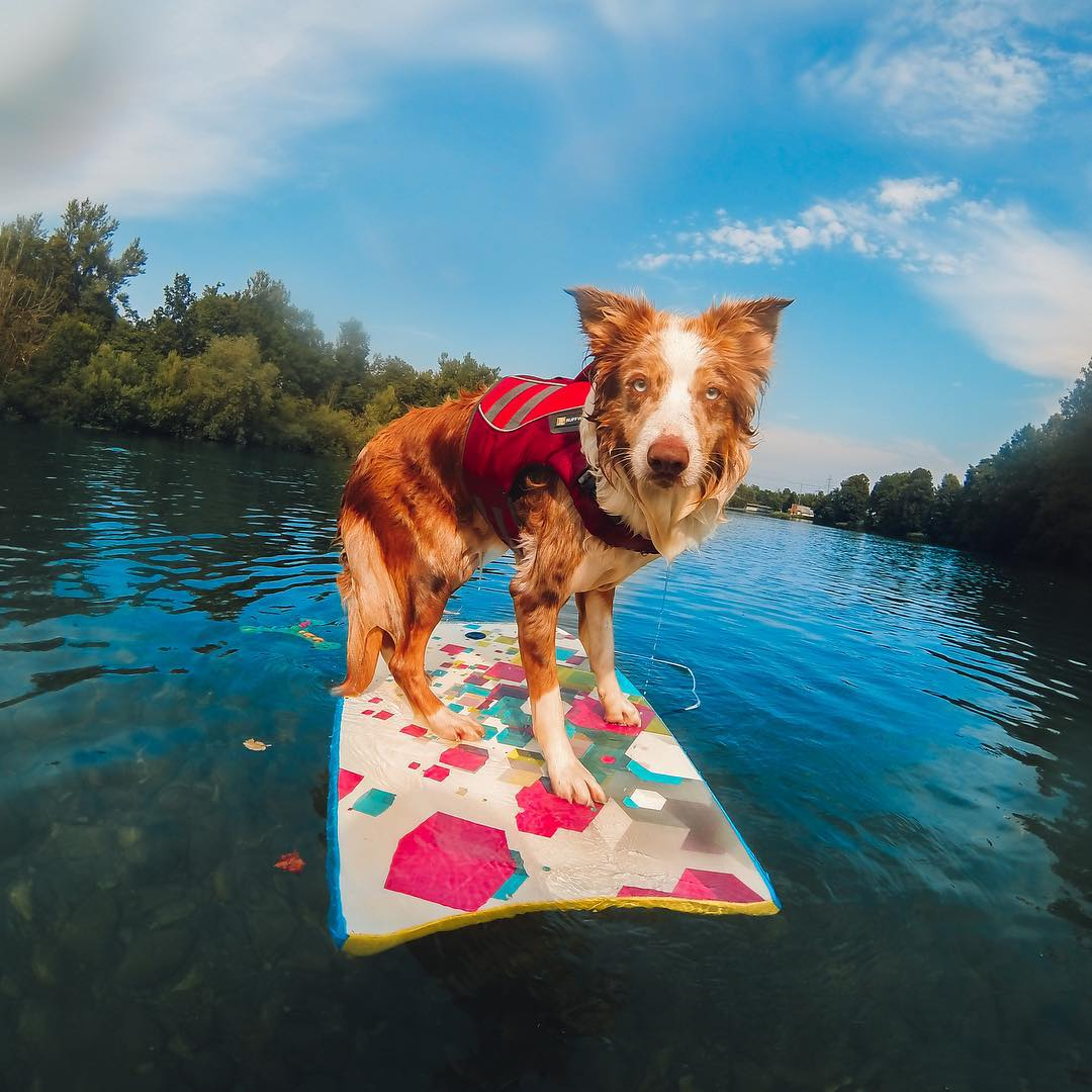 Photo of the Day! @anjatroha and her Border Collie, Vicky enjoy a hot summer day on the river in Slovenia. Share you best photos with us at gopro.com/submit
