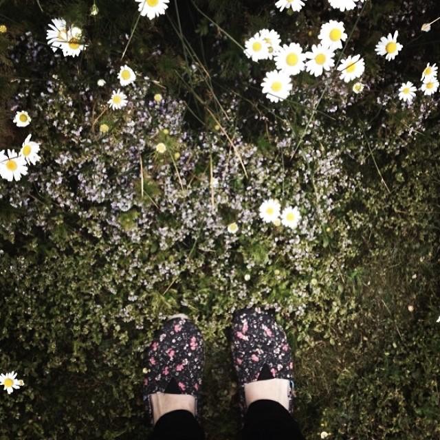 Flowers & Nature. Ph @claravarca en #Patagonia #argentina #paezholidays #muypaez #paez #paezshoes